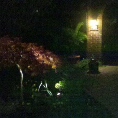 LED Spot lights illuminating home and Japanese Maple